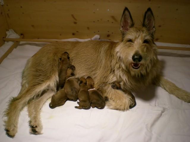 Cayenne et bébés