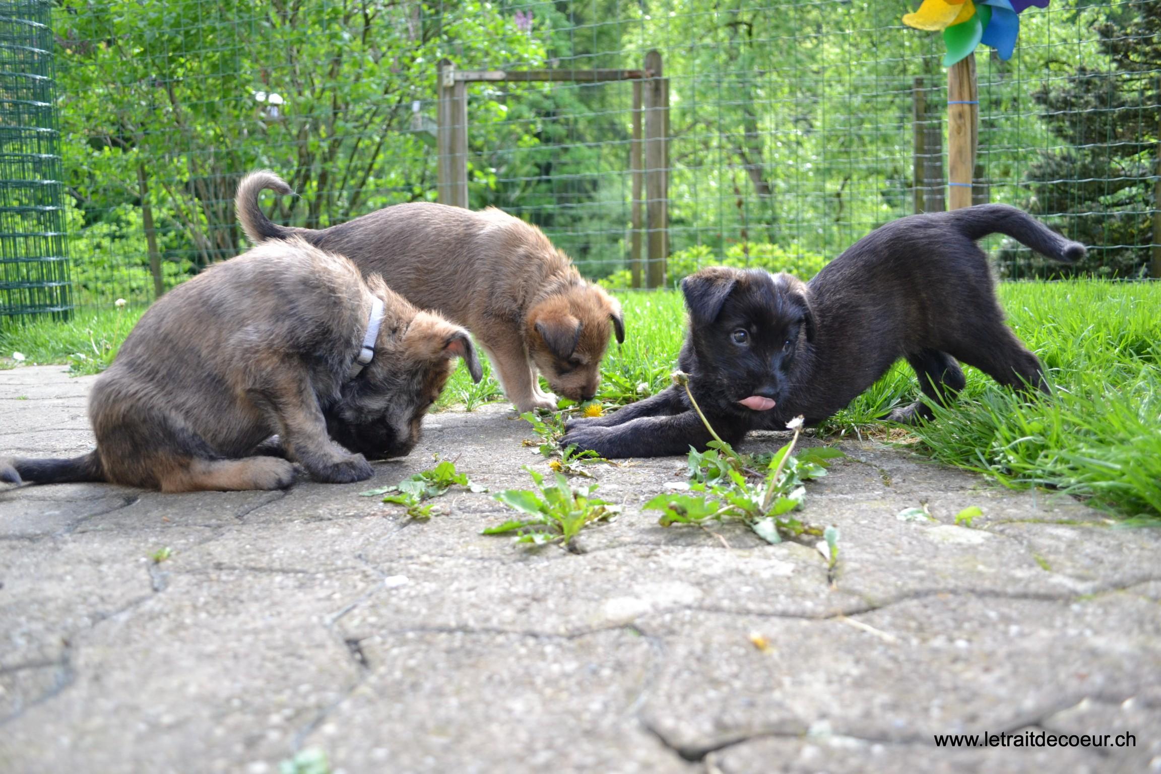 Les BB découvrent le jardin.